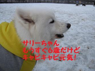 2008 11 24 dogstook6