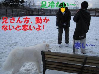 2008 11 24 dogstook8