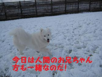 2008 11 24 dogstook9