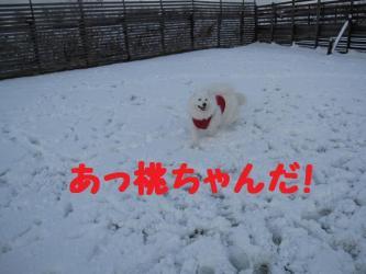 2008 11 24 dogstook10