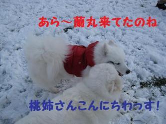 2008 11 24 dogstook11