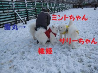 2008 11 24 dogstook12