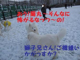 2008 11 24 dogstook14