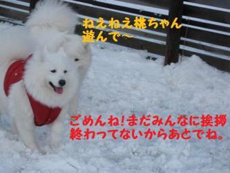 2008 11 24 dogstook16
