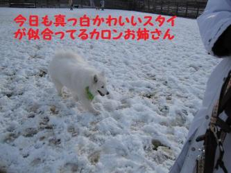 2008 11 24 dogstook17