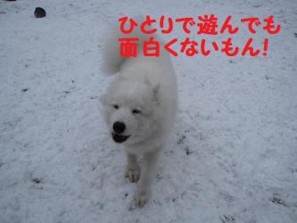 2008 11 26 ran1