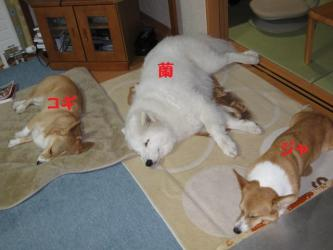 2008 11 27 3dogs2