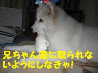 2008 12 5 ran2