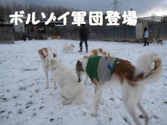 2008 12 13 dogstook1