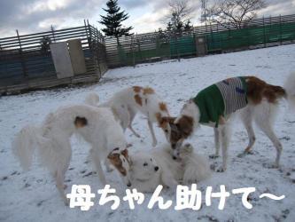 2008 12 13 dogstook2
