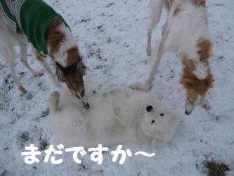 2008 12 13 dogstook4