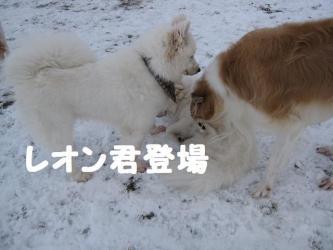 2008 12 13 dogstook5