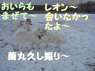 2008 12 13 dogstook6