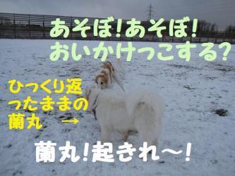 2008 12 13 dogstook7