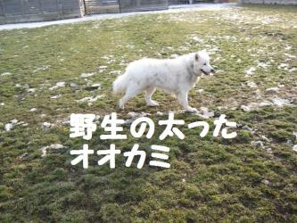 2008 11 29 dogstook1