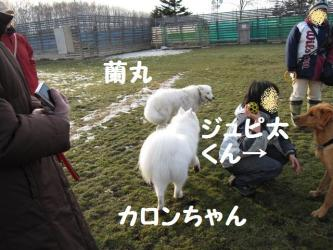 2008 11 29 dogstook2