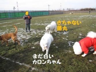 2008 11 29 dogstook4