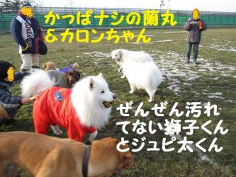 2008 11 29 dogstook5