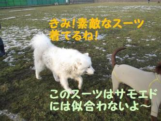 2008 11 29 dogstook6