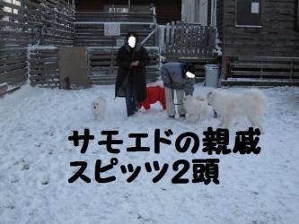 2008 12 6 dogstook