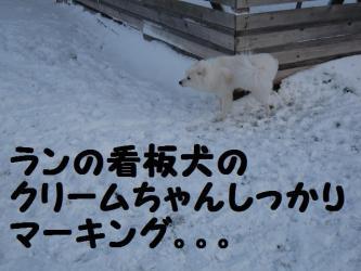 2008 12 6 dogstook2