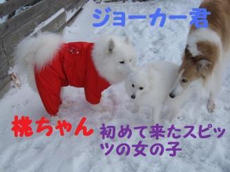 2008 12 6 dogstook3