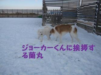 2008 12 6 dogstook4