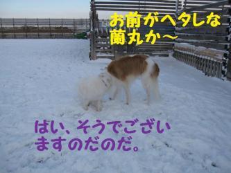 2008 12 6 dogstook5