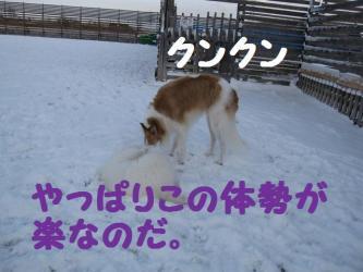 2008 12 6 dogstook6