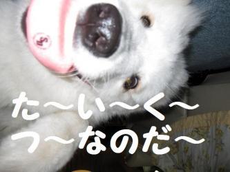 2008 12 20 ran4