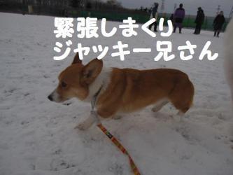 2008 12 23  dogstook3