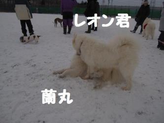 2008 12 23 dogstook1