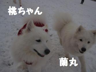 2008 12 23 dogstook2