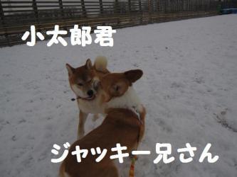 2008 12 23 dogstook4