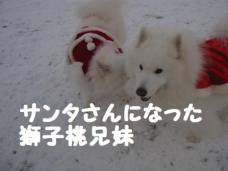 2008 12 23 dogstook5