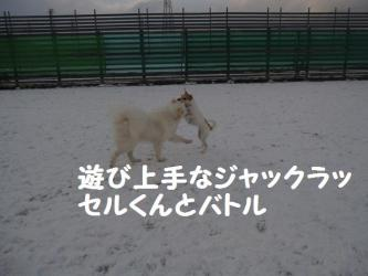 2008 12 23 dogstook6