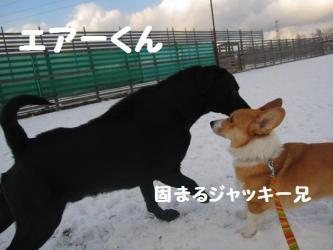 2008 12 23 dogstook8