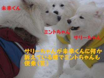 2009 1 4 dogs12