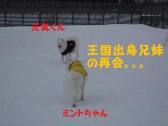 2009 1 4 dogs14