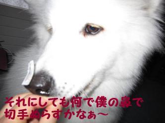 2009 1 26 ran3