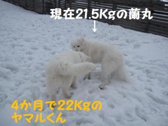 2009 2 14 ofukai1