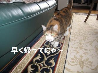 2009 3 3 mikan2