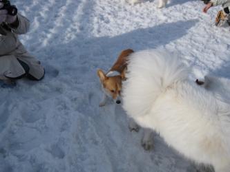 2009 3 15 dogstock1