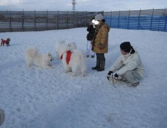 2009 3 15 dogstock2