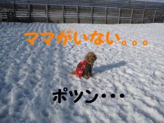2009 3 15 dogstock5
