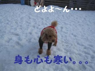 2009 3 15 dogstock6