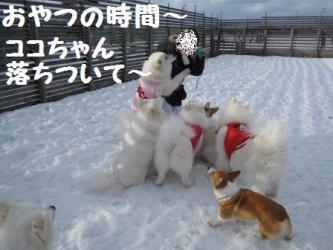 2009 3 15 dogstock7