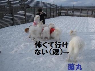 2009 3 15 dogstock8