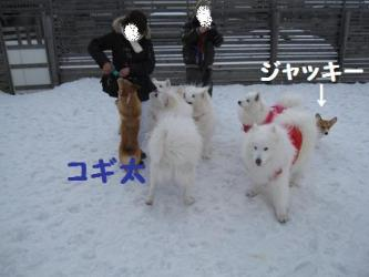 2009 3 15 dogstock9