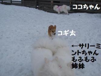 2009 3 15 dogstock10